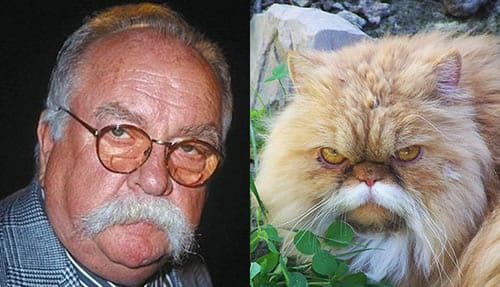 brimley-cat