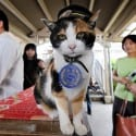 JAPAN-TOURISM-ANIMAL-CAT-OFFBEAT