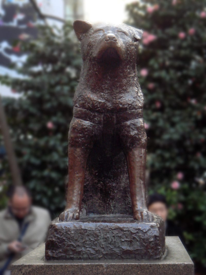 Hachiko Movie |... Hachiko Movie