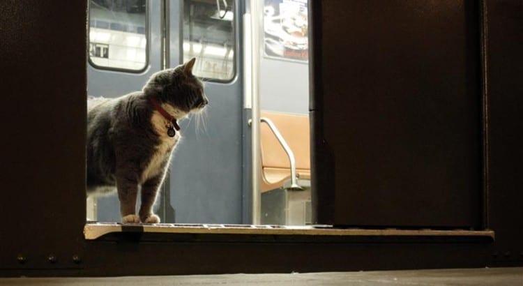 ssubwaycat1