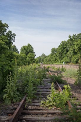 Weeds cover the tracks as the Beacon merges with the Hudson