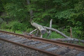 Minimal maintenance includes cutting of fallen trees
