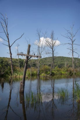 Telegraph pole in the swamp