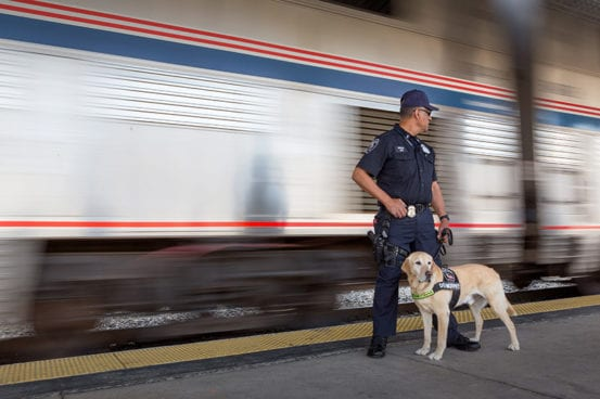 Guarding the Coast Starlight