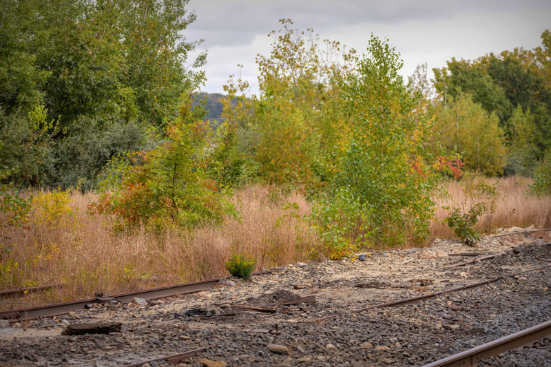 Old tracks reclaimed by nature near EAGLE