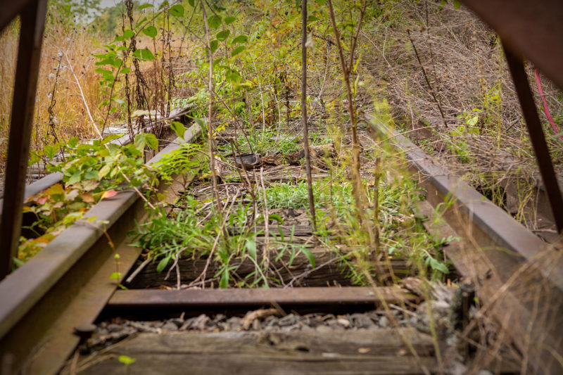 Abandoned and overgrown tracks near WATER